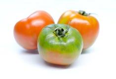 Tomaten getrennt auf Weiß Lizenzfreie Stockfotos