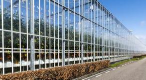 Tomaten-Gewächshäuser in Westland Holland Stockfotos