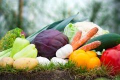 Tomaten, groene paprika's, wortelen en groenten Royalty-vrije Stock Afbeeldingen