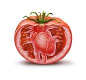 Tomaten-Herz-Gesundheits-Ikone vektor abbildung