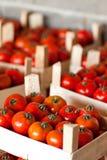Tomaten im Erntekasten Stockfotos