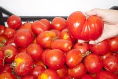 Tomaten im Kasten Stockbild