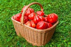 Tomaten im Korb Lizenzfreies Stockbild