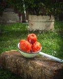 Tomaten im Metallsieb mit dem Wasserspritzen lizenzfreie stockfotos