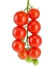 Tomaten klein auf einem Zweig Stockfotografie