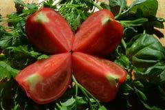 Tomaten klippte i halva nära grönsallaten och basilikan Royaltyfria Bilder