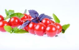 Tomaten lokalisiert Lizenzfreies Stockfoto