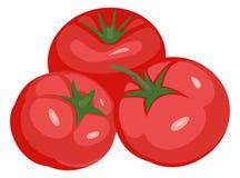 Tomaten lokalisierte Vektorillustration stock abbildung
