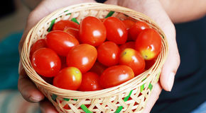 Tomaten in mand stock fotografie