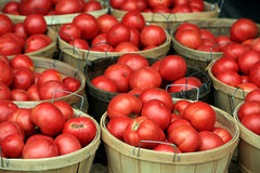 Tomaten am Markt lizenzfreies stockfoto