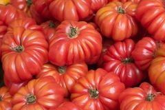Tomaten am Markt des Landwirts lizenzfreie stockbilder