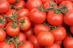 Tomaten met waterdrops Royalty-vrije Stock Afbeelding