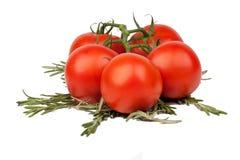 Tomaten mit Basilikumzweigen Stockbild
