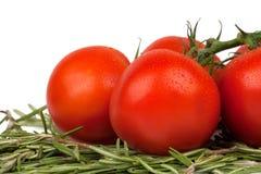 Tomaten mit Basilikumzweigen Lizenzfreie Stockfotografie