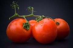 Tomaten mit Wasser-Tropfen Lizenzfreie Stockfotos