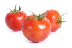 Tomaten mit Wassertropfen lizenzfreie stockfotografie