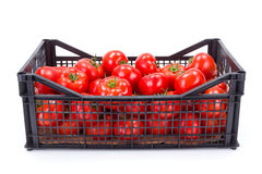 Tomaten (Nachtschadelycopersicum) in plastic krat Royalty-vrije Stock Afbeelding