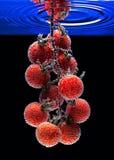 Tomaten onderwater behandeld met bellen Stock Afbeeldingen