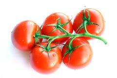 Tomaten op een Wijnstok stock fotografie