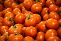 Tomaten op vertoning Stock Foto's