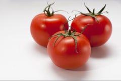 Tomaten op witte achtergrond stock afbeelding