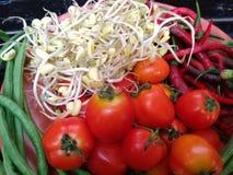 Tomaten, Paprika und Sprösslinge über der Platte Lizenzfreie Stockfotografie