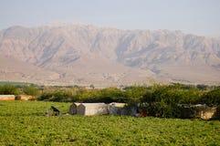 Tomaten-Plantage - Jordanien Lizenzfreie Stockfotografie