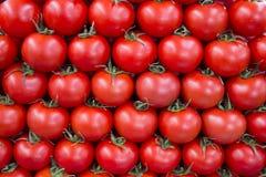 Tomaten in rij als achtergrond Stock Foto's