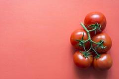Tomaten rot Stockbild