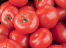 Tomaten stellten acht ein Stockfotos