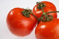Tomaten - Tomaten Royalty-vrije Stock Afbeelding