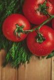 Tomaten und Dill Lizenzfreies Stockbild
