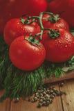 Tomaten und Dill Lizenzfreie Stockbilder