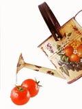Tomaten und ein Bewässerungspotentiometer Lizenzfreies Stockfoto