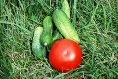 Tomaten und Gurken in einem Gras. Lizenzfreie Stockbilder