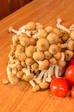 Tomaten und Pilz Lizenzfreie Stockfotografie