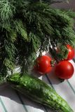 Tomaten verse dille en komkommer op een keukenhanddoek, hard licht stock afbeelding