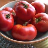Tomaten vom Garten Stockbild