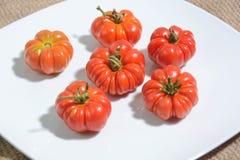 Tomaten von der italienischen Landschaft Stockfoto