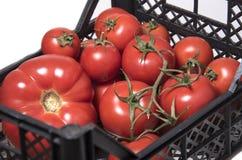 Tomaten von verschiedenen Größen in einem Kasten für Gemüse Lizenzfreie Stockbilder