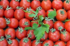 Tomaten voor achtergrond Royalty-vrije Stock Afbeeldingen