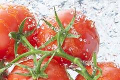 Tomaten-Wasser-Spray-neues Lebensmittel lizenzfreie stockfotos