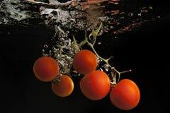Tomaten in water Royalty-vrije Stock Afbeelding