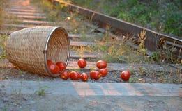 Tomaten zerstreut auf den Schienenstrang (Seitenansicht) Lizenzfreie Stockfotos