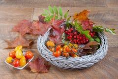 Tomaten, Zweig von rowantree und Herbstlaub liegt auf einem hölzernen Schreibtisch Stockfoto