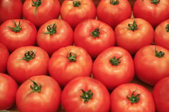 Tomatenachtergrond Stock Fotografie