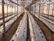 Tomatenbearbeitung stockfotos