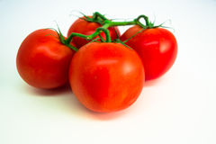 Tomatenbos royalty-vrije stock afbeelding