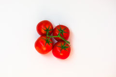 Tomatenbos stock afbeelding