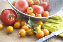 Tomatenernte Stockbild